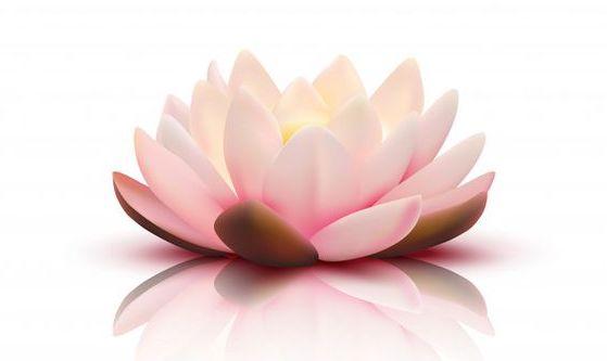 Brahma Kumaris Italia Raja Yoga